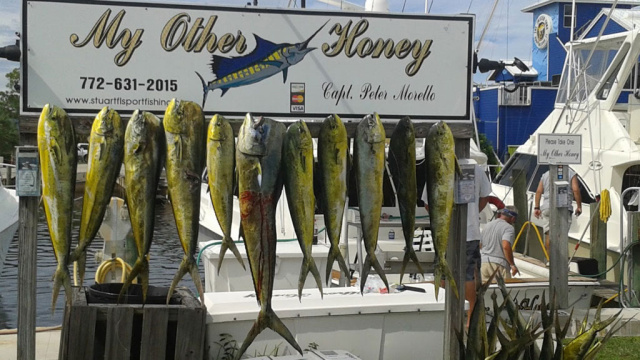 Look for our sign.  Great day of fishing Port St. Lucie Offshore