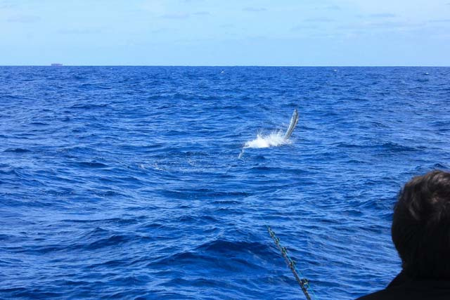 Feb Sailfish