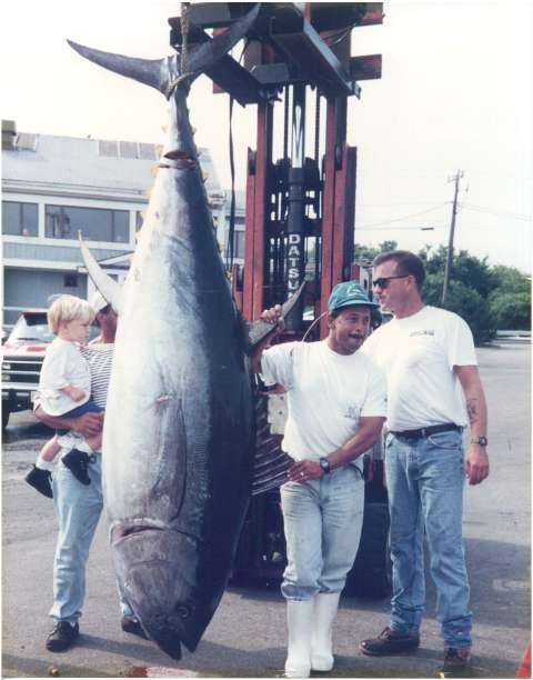 700+lb Bluefin Tuna