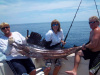 Alexis' Huge Sailfish
