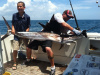 Big July Sailfish
