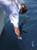July Sailfish Release