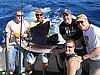 Gottholm Party Sailfish
